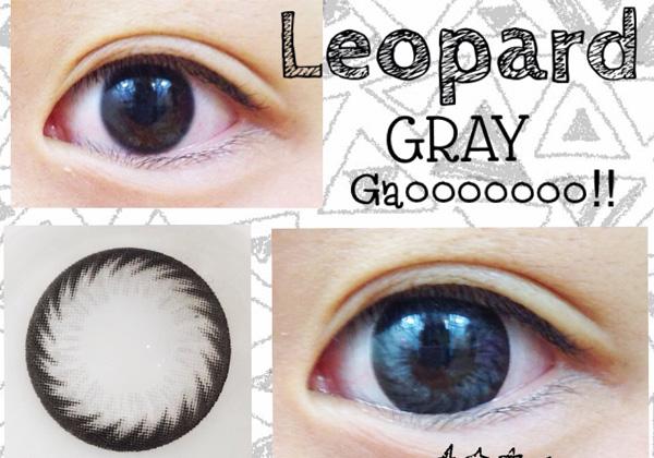 Leopard GRAY (ヒョウ )1